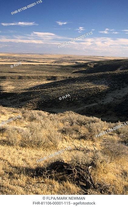View of arid habitat, Oregon Trail, near Hagerman, Gooding County, Idaho, U S A