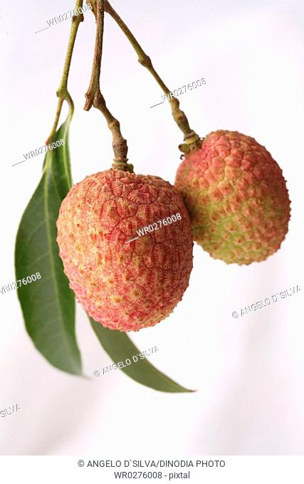 Fruit , Litchi with leaves Litchi chinensis hanging against white background