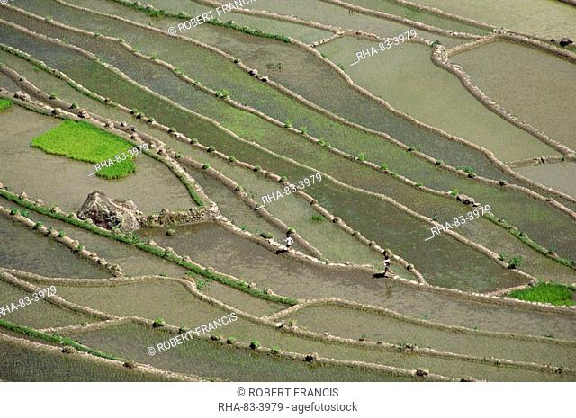 Aerial of the rice terraces around the village of Batad in the Mountain Province in north Luzon island, the Philippines, Southeast Asia, Asia