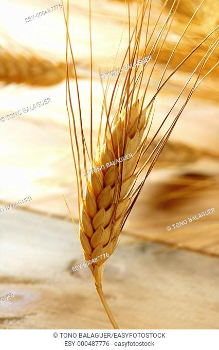 golden wheat cereal over wood background