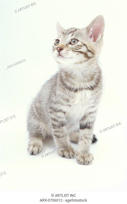 A sitting kitten looking up