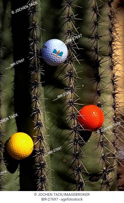USA, United States of America, Arizona: golf cours in Tucson. Sheraton El Conquistador Golfclub. golfball sticks in a cactus