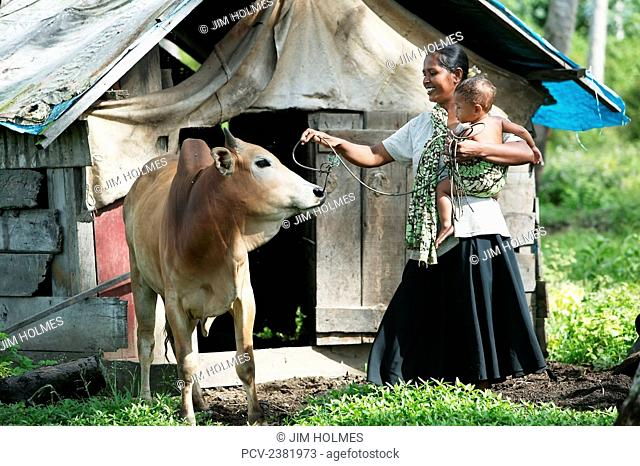 Woman carries her son as she manages the remaining house cow after the earthquake and Indian Ocean Tsunami of 2004; Lamno, Aceh Province, Indonesia