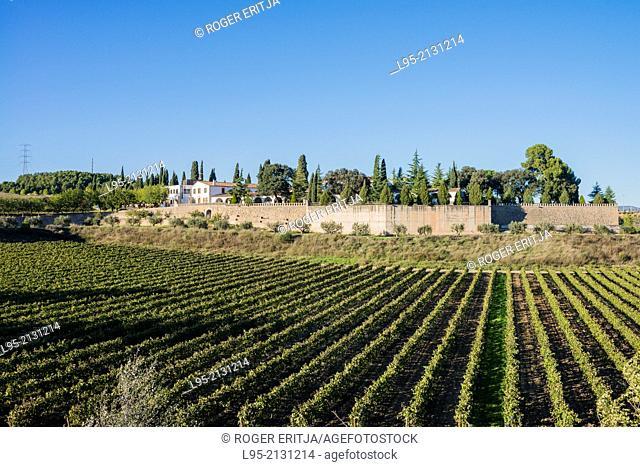 Vinyes i masia de Can Rius, actualment propietat de Juvé i Camps