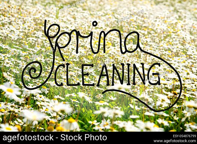 English Calligraphy Spring Cleaning. Beautiful Scenery Of Sunny, White Daisy Flower Meadow In Spring Season