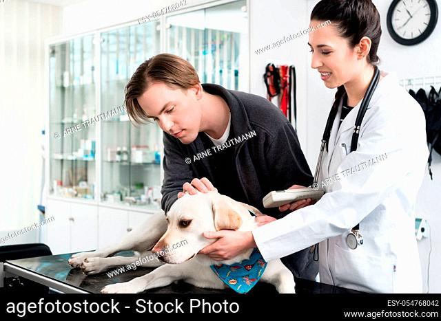 Young female veterinarian examining dog in hospital