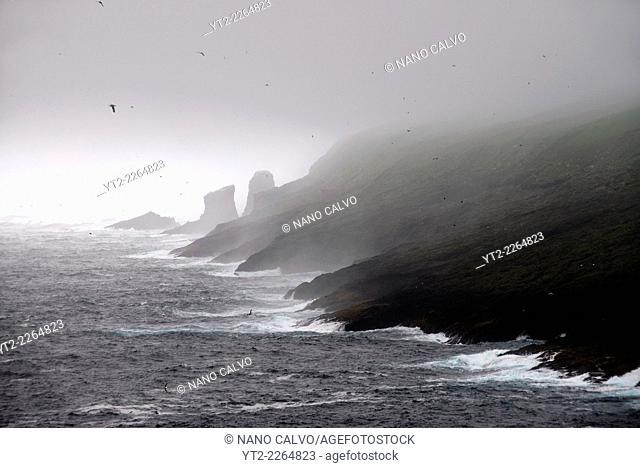 Foggy cliffs of Mykines, Faroe Islands