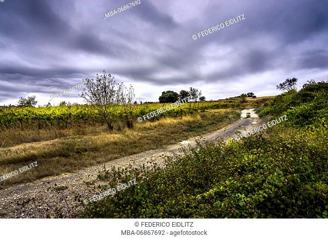 access road on the edge of a wine field