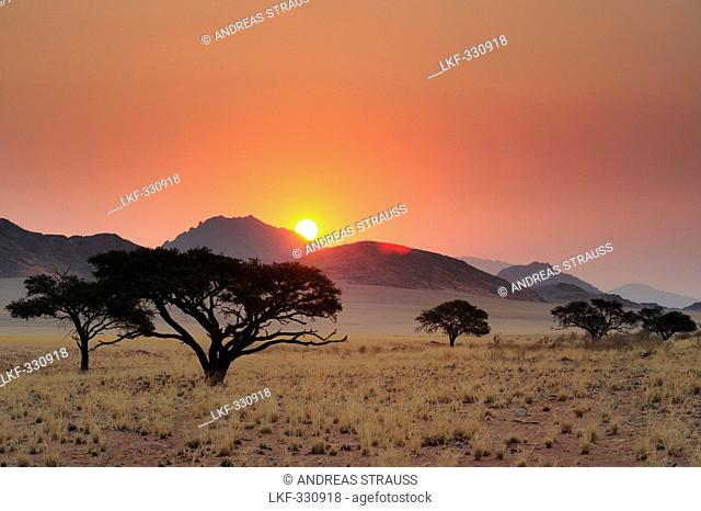 Sunset over savannah with savannah grass and camel-thorn trees, Namib Rand Nature Reserve, Namib desert, Namib, Namibia