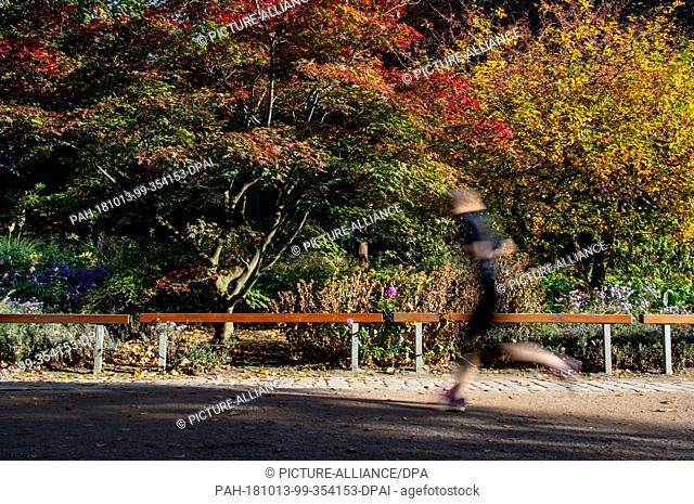"13 October 2018, Hamburg: A jogger walking in the park """"Planten und Blomen"""" past autumn-coloured trees and bushes. Photo: Axel Heimken/dpa"
