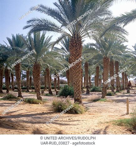 Eine Oase inmitten der Wüste Negev am Toten Meer, Kibbuz Yotrata, Israel 1980er Jahre. An oasis in the middle of Negev Desert at the Dead Sea, Kibbuz Yotrata