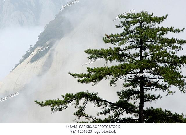 Mist over Mount Hua, one of China's five Sacred Taoist Mountains, in Shaanxi, China
