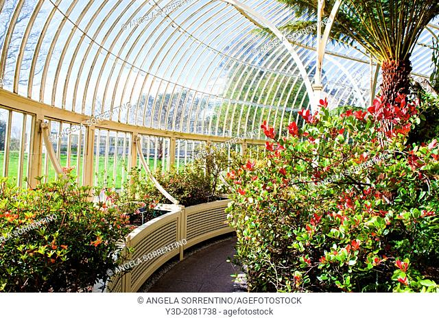 Greenhouse of the Botanical Garden, Dublin