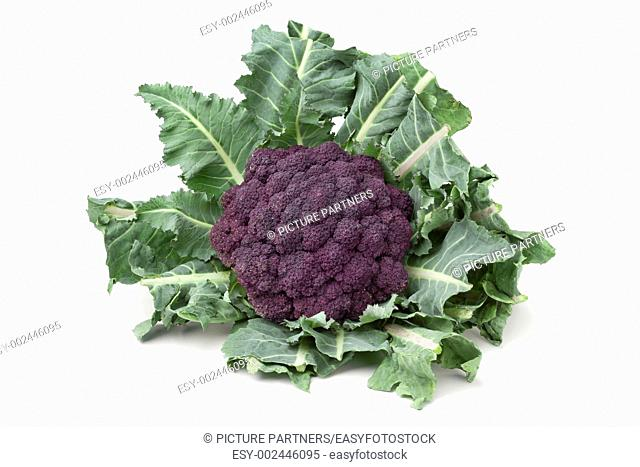 Fresh purple broccoli on white background