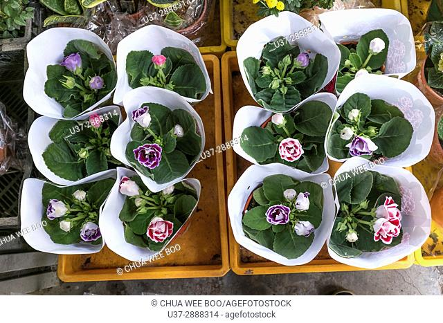 Bouquet wrapped in paper, Cameron Highland, Pahang, Malaysia