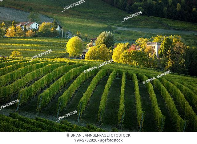 Autumn evening sunlight on the vineyards near Barolo, Piemonte, Italy