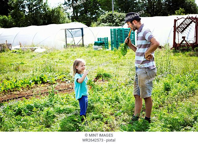 A man and a girl eating freshly harvested carrots in a vegetable patch