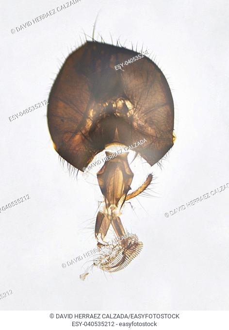 Microscopic photography. House fly mouthpart and head