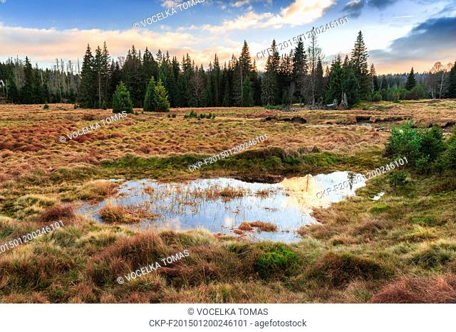 A peat bog near Javori stream (Javori potok) at the Sumava National Park. Photographed place is located near Modrava village