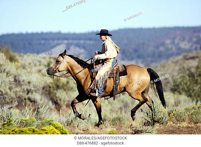 Cattleman with 'Quarter horse' and/or 'Paint' of USA. Ponderosa Ranch. Seneca. Oregon . USA