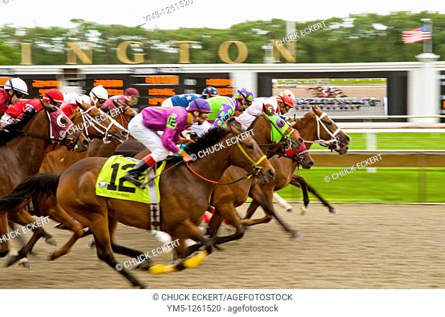 Thoroughbred's bunched together down the final stretch run at Chicagoland's Arlington Park race track