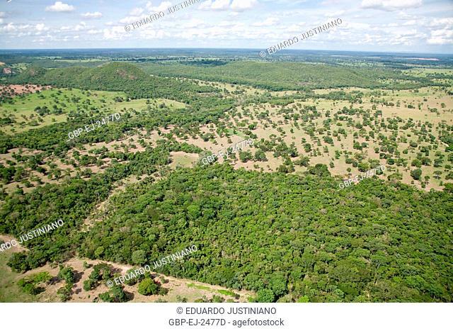 Forest and Deforested Area, Field, Mato Grosso do Sul, Brazil