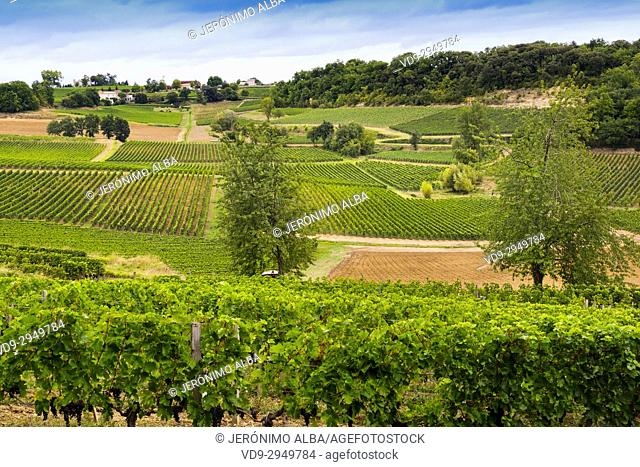 Vineyards. Bordeaux wine region. Aquitaine Region, Gironde Department. France Europe