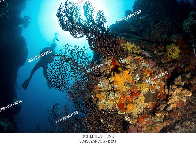Diver on coral reef