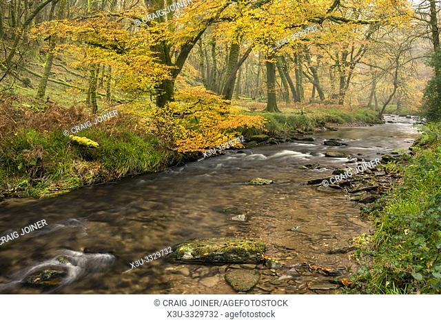 Autumn colour at Dane's Brook in Buckminster Wood in Exmoor National Park near Dulverton, Somerset, England
