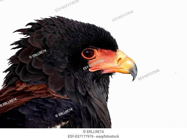 a portrait of a beautiful eagle
