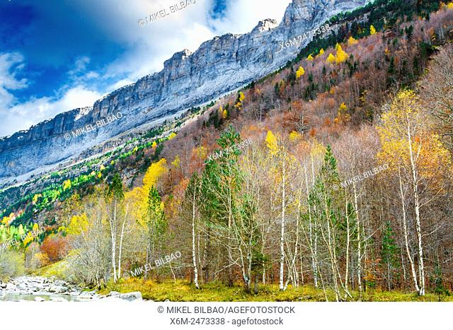 Faja del Pelay and forest. Ordesa Valley. . Ordesa National Park. Pyrenees, Huesca, Spain, Europe