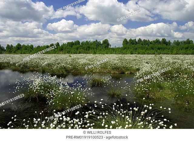 Goldenstedter Moor, marsh, Germany