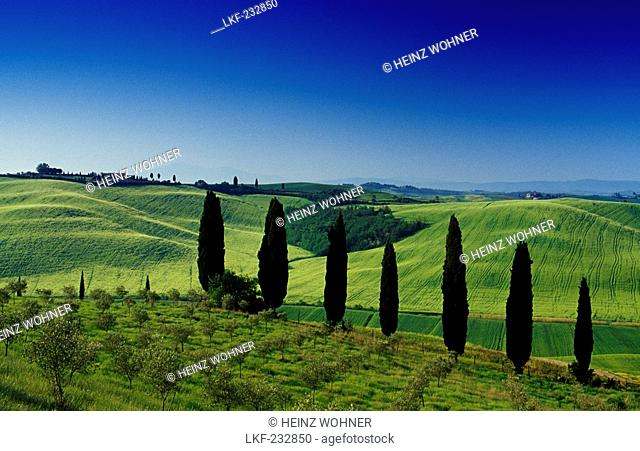 Landscape with cypresses under blue sky, Crete, Tuscany, Italy, Europe