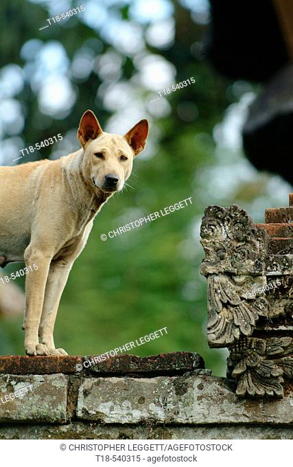 dog standing on fence