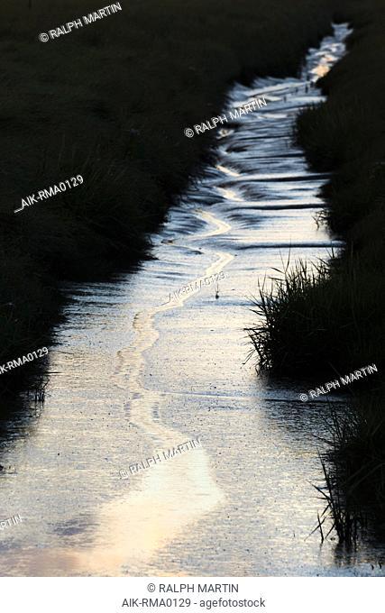 Salt marsh, Hamburger Hallig, Germany