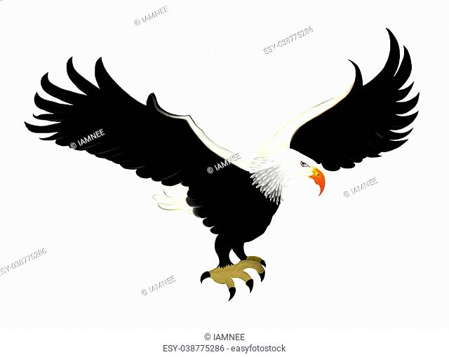 Smart Bald Eagle Soaring in The Sky, Isolated on White Background