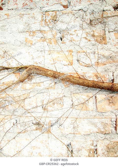 Brick wall, tree roots, São Paulo, Brazil