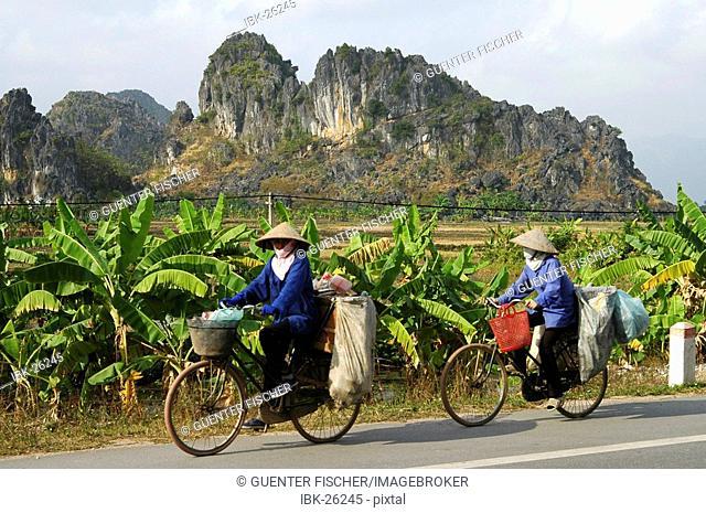 Banana plots in the hinterland Vietnam