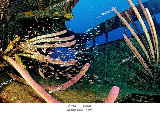 Sponge and Fishes at Wreck Hilma Hooker, Caribbean Sea, Bonaire