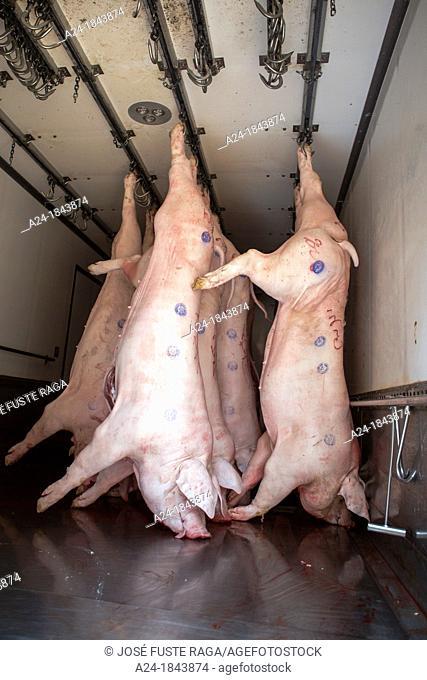Pigs delivery, Hong Kong, China