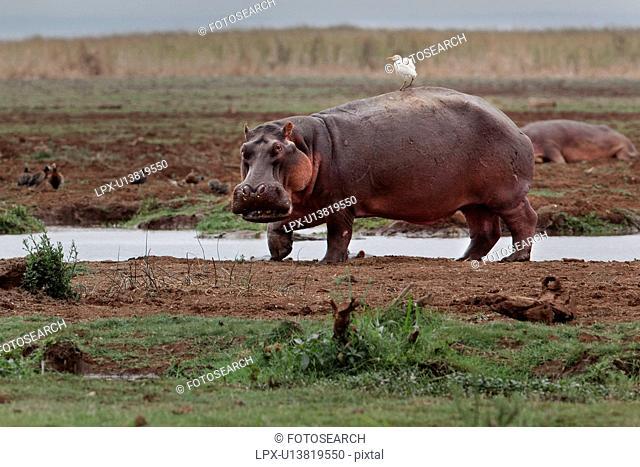 activity, Central, action, Tanzania, Manyara, animal, Africa