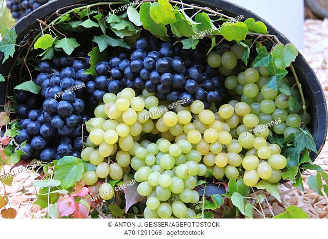 Grapes, clusters