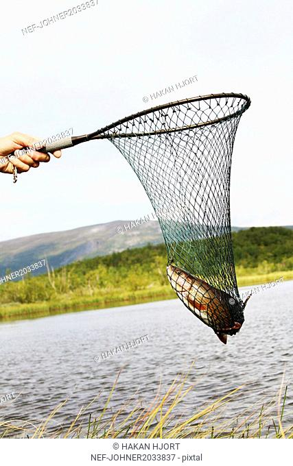 Hand holding net with fish