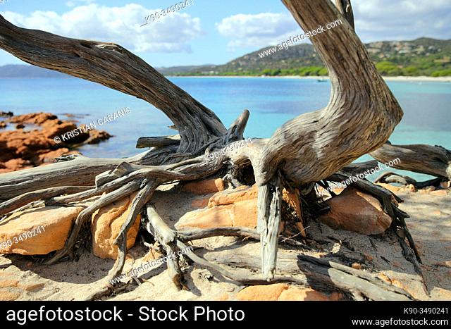 Dried tree trunk in the foreground with the bay of Palombaggia, Corsica, France, Europe