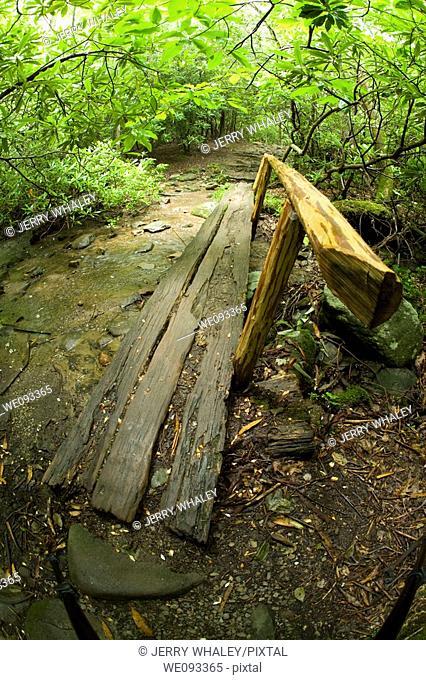 Log Footbridge, Nature Trail Scenics, Great Smoky Mtns Nat  Park, TN