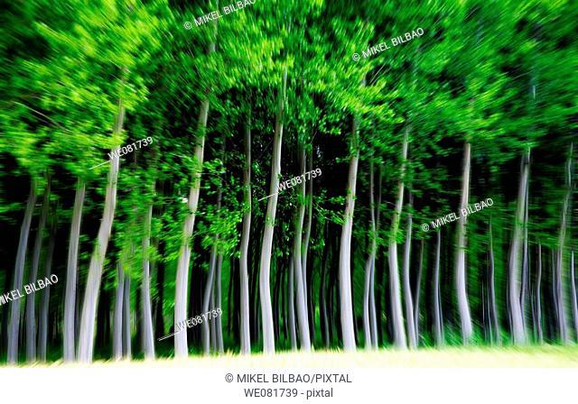 Forest, Ancin, Navarra, Spain