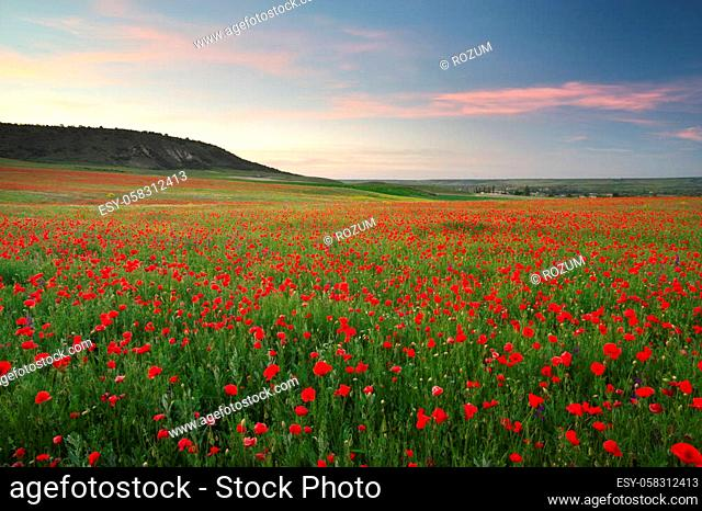 Poppies meadow landscape. Spring nature composition