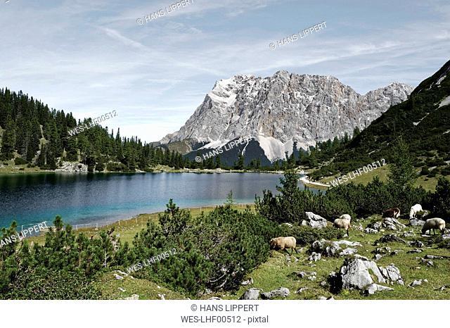 Austria, Tyrol, Ehrwald, Seebensee with Zugspitze in the background