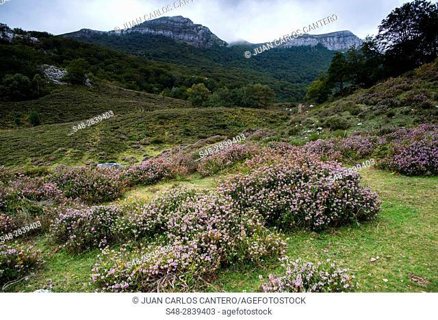 Natural Park Collados del Ason. Cantabria. Spain. Europe