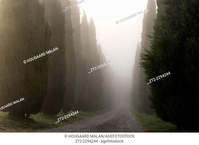 Landscape photo of a lane of cypress trees on a misty morning. Val D'Orcia, Tuscany, Italy